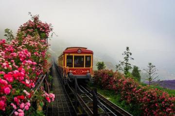 Thung lũng hoa hồng lớn nhất Việt Nam ở đâu?